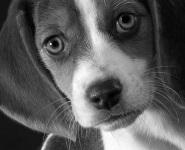 фон для календаря собака